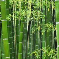 Billede til varegruppe Bambus garn