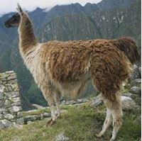 Billede til varegruppe Lama garn