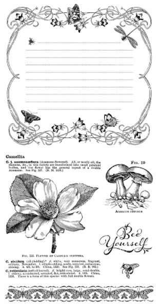 Gummi stempel fra Graphic 45 -  Nature Sketchbook