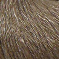 # 09 - Mørk Honning